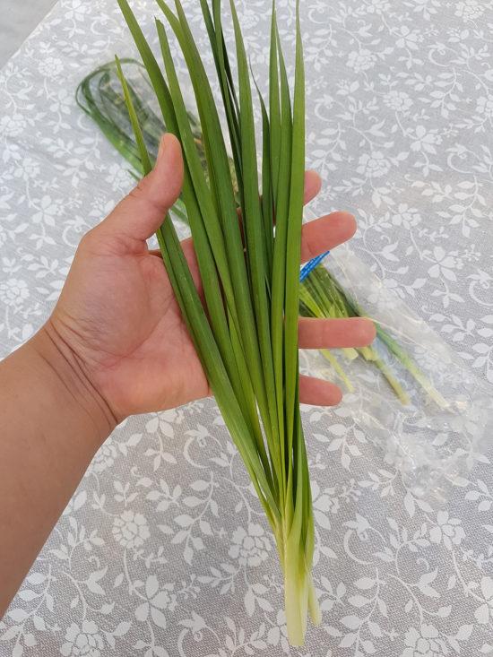 kinesisk gressløk-kittiya